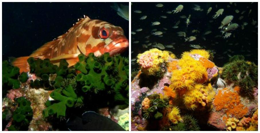 Farbenprächtige Korallen und Fische in dunkler Tiefsee