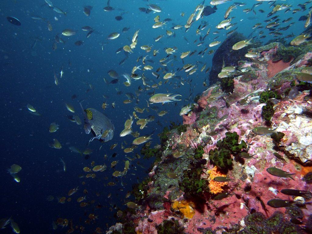 Fischschwärme und bunte Korallen