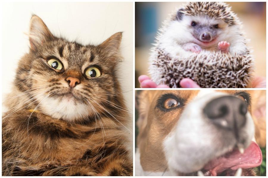 Tiere machen Selfies