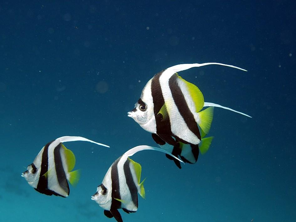 bunte Fische in blauem Wasser