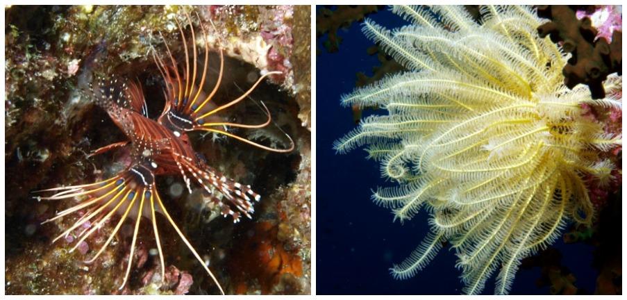 interessanter Fisch und bunte Koralle