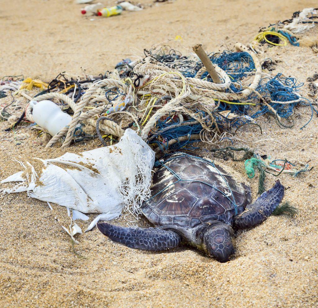 Schildkröte verheddert sich im Müll